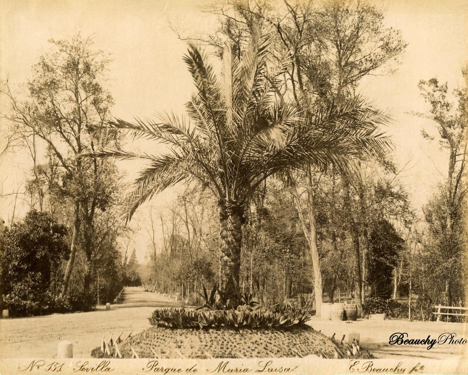 Beauchyphoto_Parque_de_Maria_Luisa_c.1880_Emilio_Beauchy_Cano_fotografias_antiguas_postales_vistas_y_monumentos