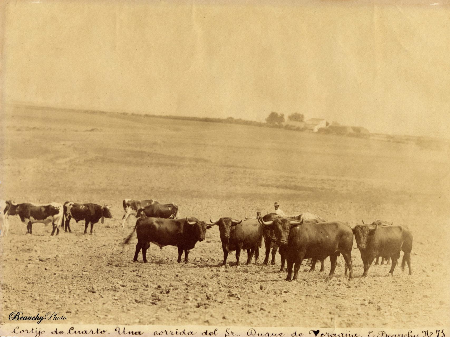Corrida de toros en el Cortijo del Cuarto