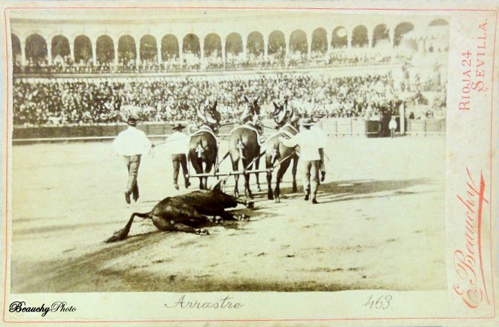 Arrastre del toro en corrida de toros en Sevilla 1900