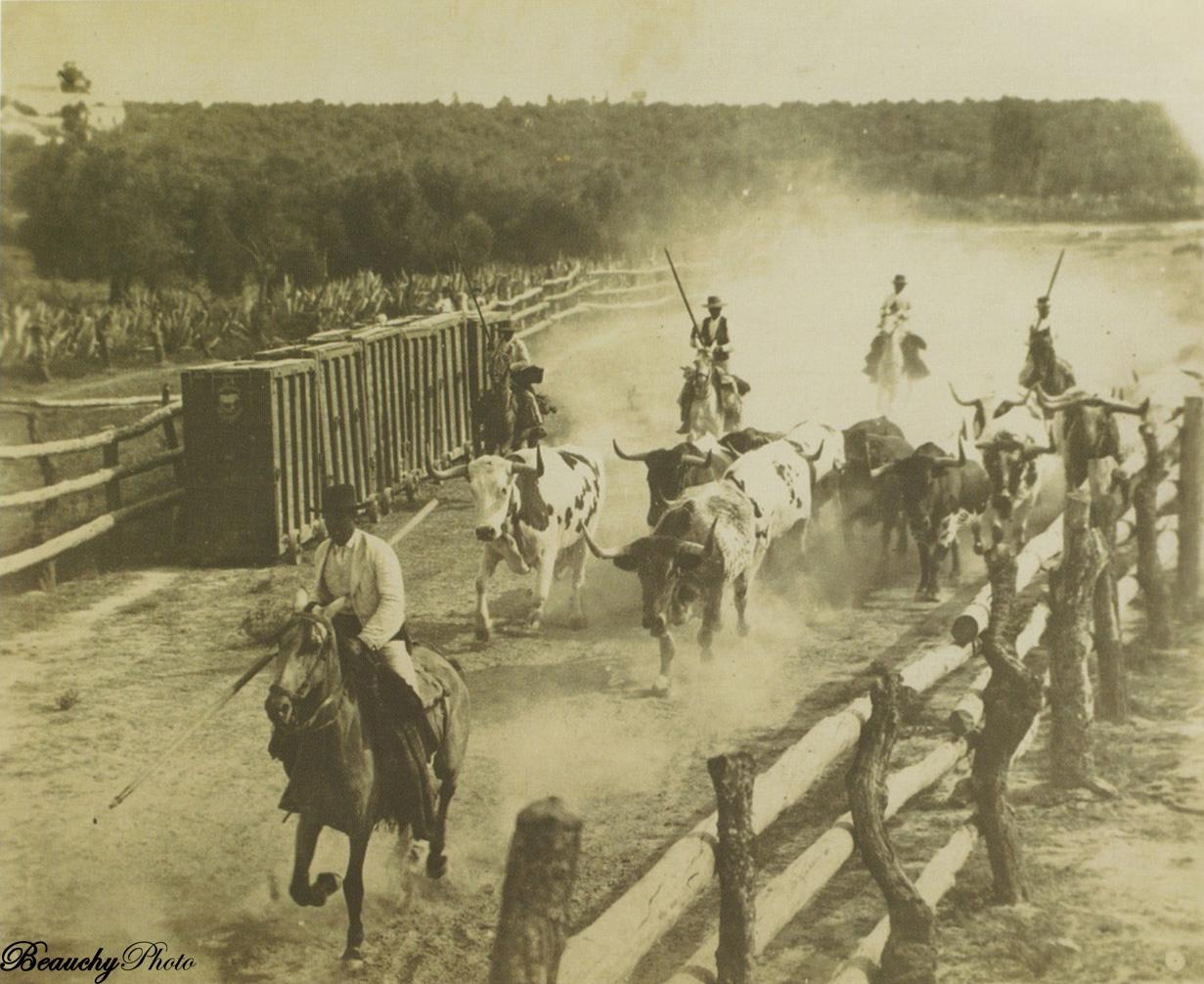 Final del encierro de toros en Sevilla en 1897