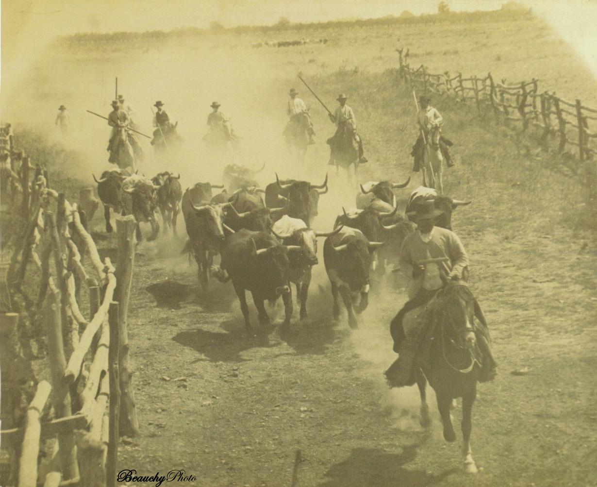 Encierro de toros en Sevilla en 1897